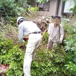 庭木の剪定いたします