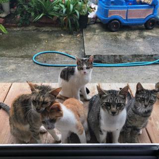 生後6ヶ月可愛い子猫4匹