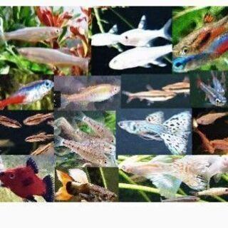 おまかせ熱帯魚10匹500円‼️