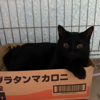 シャイな女の子♡黒猫アリスちゃん♀