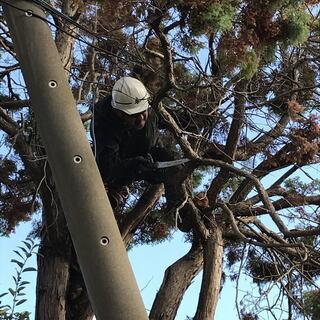 横浜市の大きく育ち過ぎ風台風で倒木の危険性がでてきた植木の伐採や...