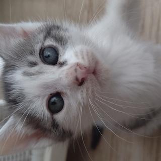 3月末生まれの子猫5匹