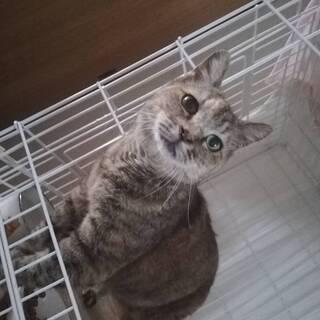 登戸再開発地域の野良猫でした