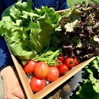 発送できます!「農家のおまかせ野菜パック」の画像