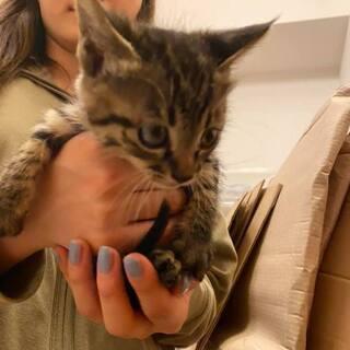 野良子猫/1ヶ月ちょっと