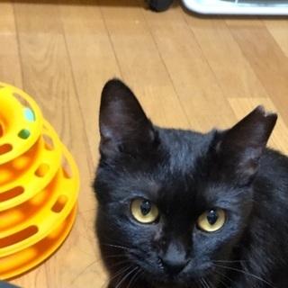 超甘えん坊の黒猫ちゃん