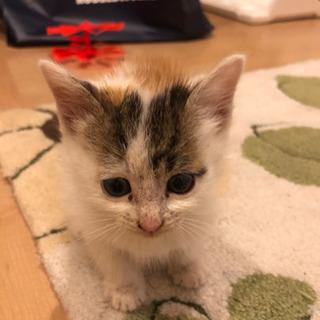 産まれて数週間の子猫を飼って頂けませんか?