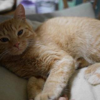 保護猫活動への物品支援のお願い(餌・砂)