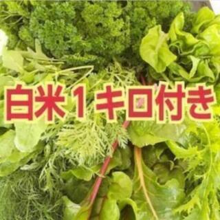 ⭐️白米&お野菜セット【よねベジ】