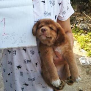 生後、2か月の子犬です。