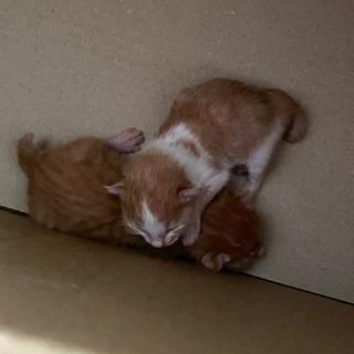 子猫【里親募集】