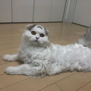 猫の里親募集  里親様決まりました。