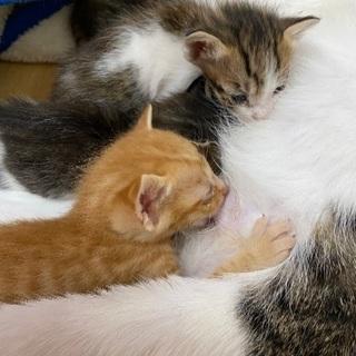 今日で生後3週間 幼猫ちゃん4匹