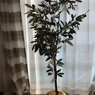 オリーブの木 造花
