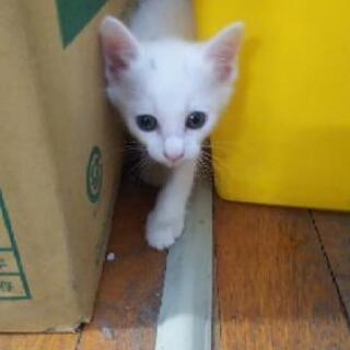 【 決定しました】保護猫里親募集。