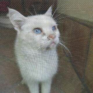 猫 迷い猫でした!飼い主判明しました