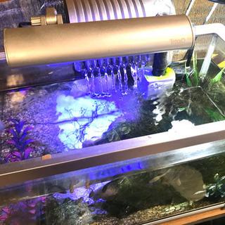 水槽セット(熱帯魚、餌、照明)付き