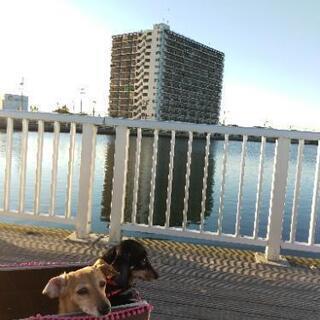 嬉しいオリパラ🏄♂️開催場所から近い南向きマンション(オール電...