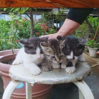 3月20日生まれ、猫3匹