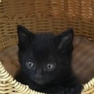 ビキニを着た黒猫君里親募集
