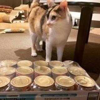 【新橋】和風猫カフェで働きませんか?
