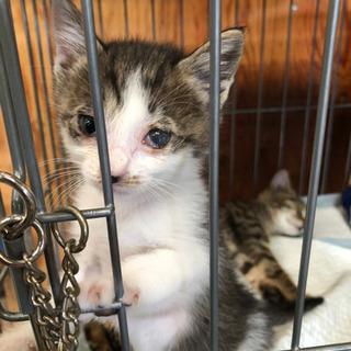 保護猫 - 比企郡