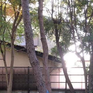 庭の大木や伐採又は抜根致します。また、草刈りも可能です。 - 宇都宮市