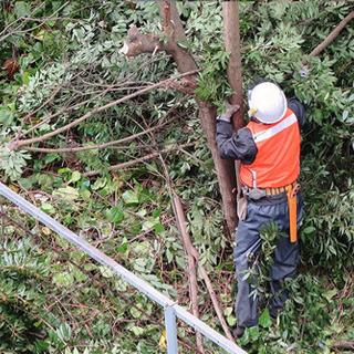 庭の大木や伐採又は抜根致します。また、草刈りも可能です。 - 剪定/造園