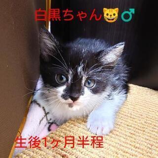 白黒の可愛い子猫ちゃん!