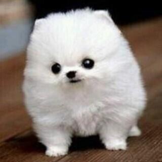 ソフトバンク犬プリッツプレゼント🐕!!