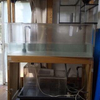5月末まで限定価格!熱帯魚  淡水魚  オーバーフロー水槽120...