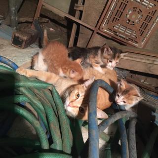 里親募集 子猫 4匹 届け出済み