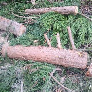 薪用 伐採した杉