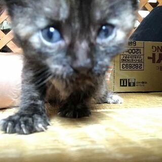 生後3週間~4週間の子猫2匹