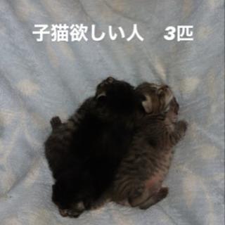 野良 子猫 3匹