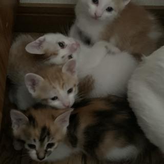 人懐こい子猫4匹 3月30日生まれ