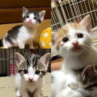 生後1ヶ月未満の可愛い3匹