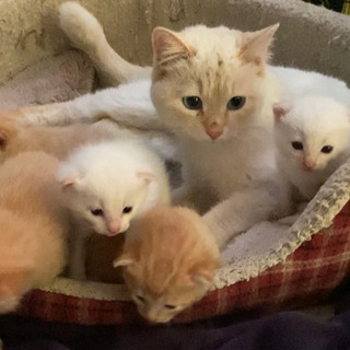 【※募集終了致します。皆様ありがとうございました!】子猫と母猫の...