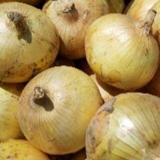 玉ねぎ佐賀県産全国発送約10㎏1,300円規品です露地玉ねぎ収穫始まりました − 佐賀県