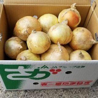 玉ねぎ佐賀県産全国発送約10㎏1,300円規品です露地玉ねぎ収穫始まりましたの画像