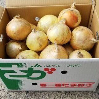 玉ねぎ佐賀県産全国発送約10㎏1,300円規品です露地玉ねぎ収穫始まりました - 小城市