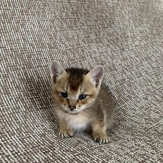 甘えん坊な子猫の里親になってくれませんか?