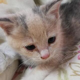 生後1ヶ月過ぎのネコ3匹