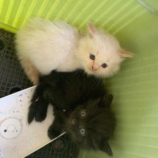 1ヶ月〜1ヶ月半 子猫4匹