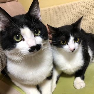 生後1年の成猫2匹