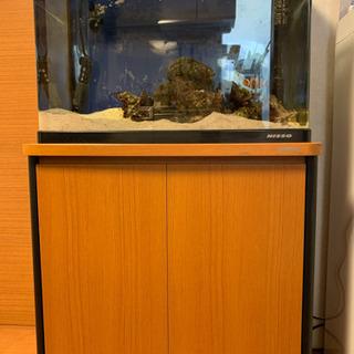 カクレクマノミと水槽と棚