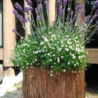 丸太の植木鉢 ヒノキ 1個