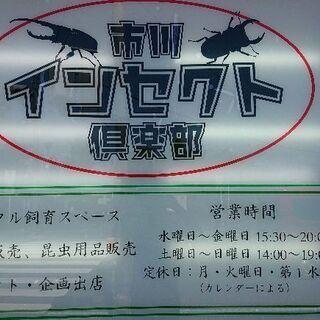 見学大歓迎‼️15才以下限定【カブトムシ、クワガタ】幼虫来店プレ...