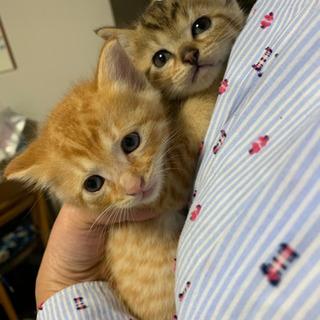 ノラ猫が産んだ猫です