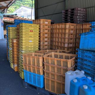 早い者勝ちです 農業用カゴ プラスチックケース 来週まで 期間限定